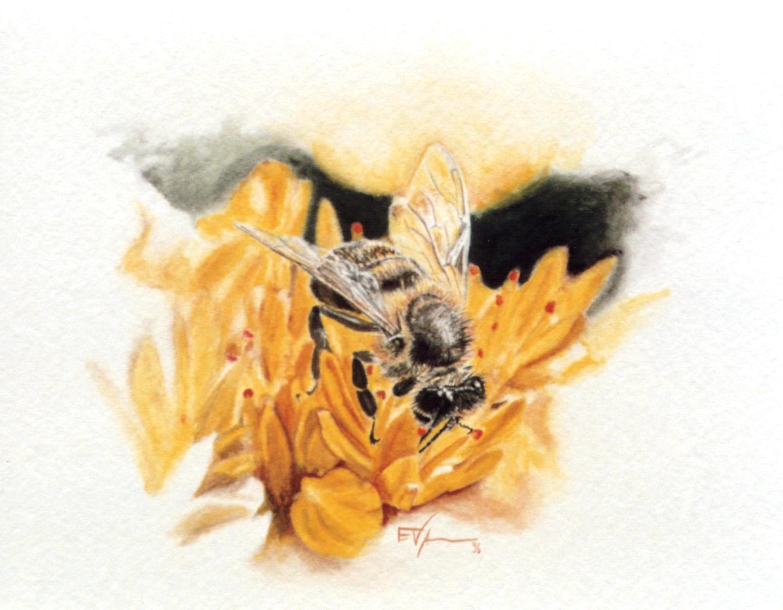 Senda de las abejas
